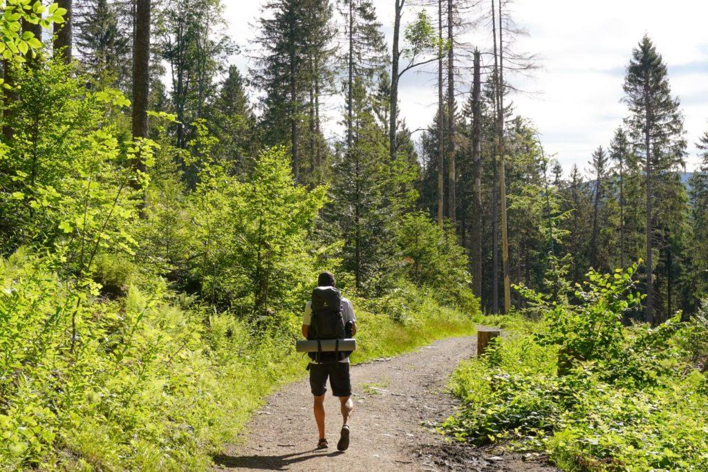 Wanderer im Wald, umweltbewusstes Wandern