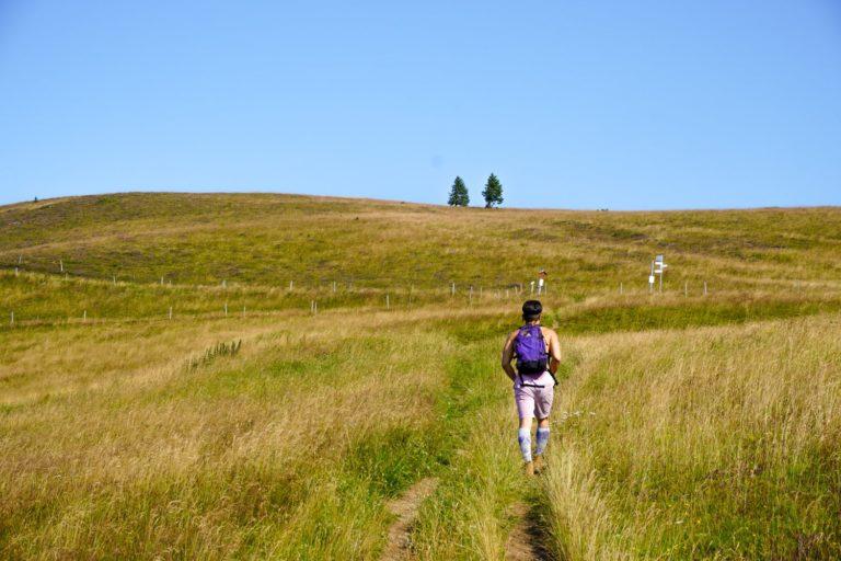 Tageswanderung organisieren - Wanderer auf Pfad